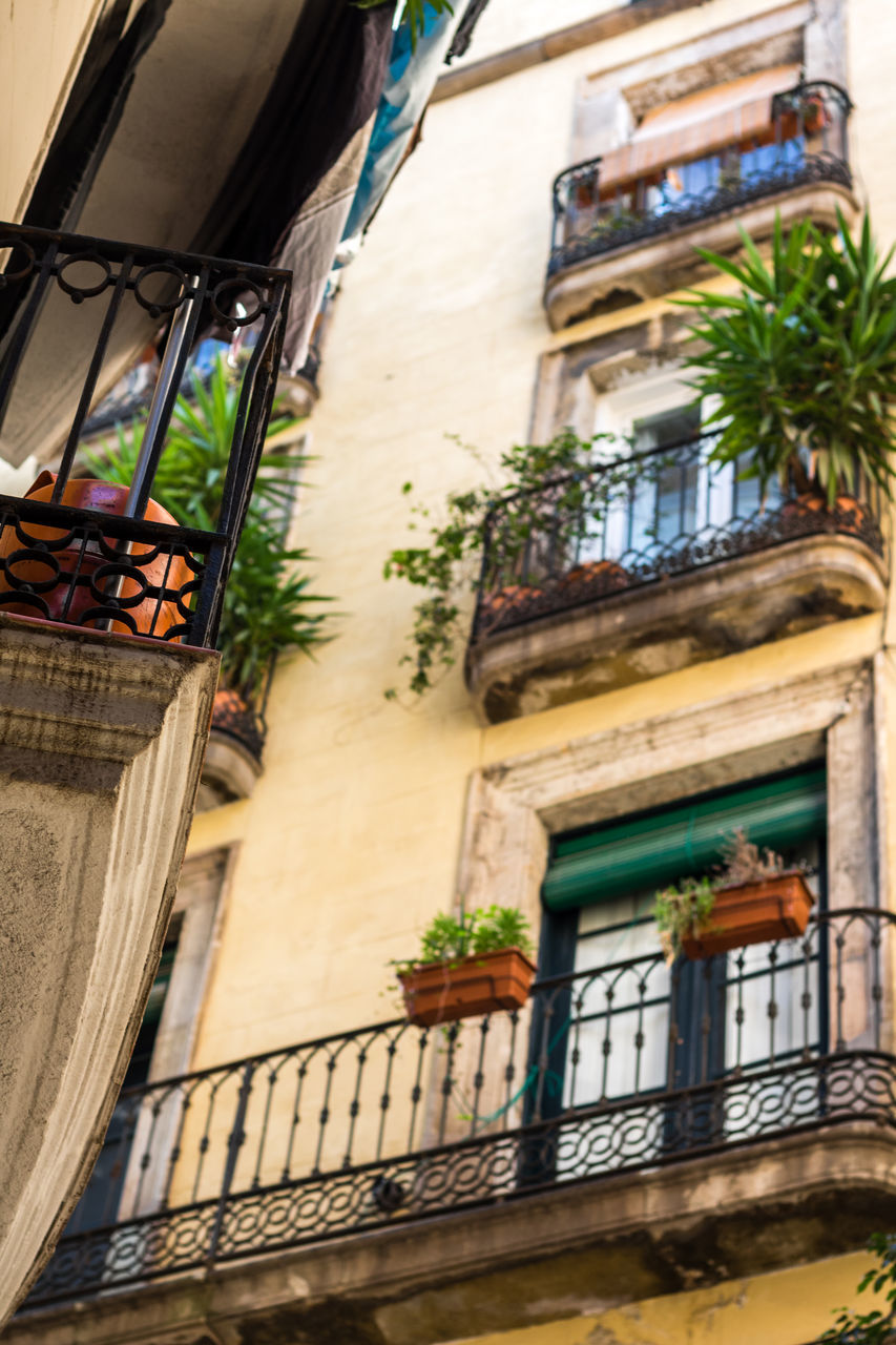 building exterior, architecture, built structure, balcony, low angle view, window, house, potted plant, outdoors, no people, residential building, day, plant, window box, tree, city, close-up