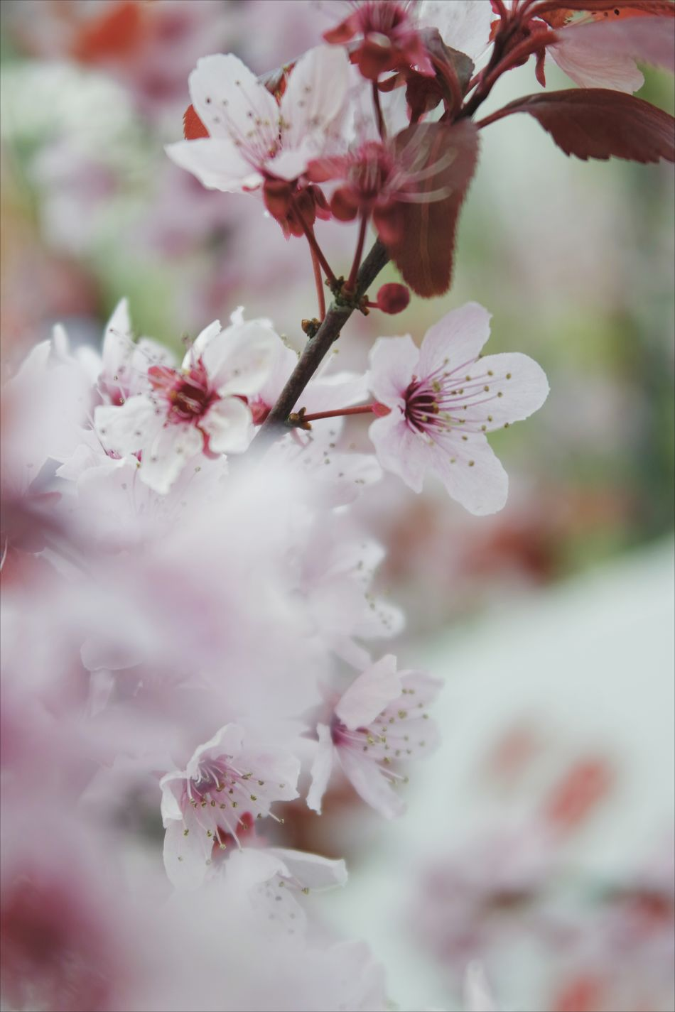 Branch Blossom Flower Nature Tree Flower Head Beauty In Nature Twig Winter Springtime Cherry Blossom Plant Beauty Almond Tree Growth Outdoors No People Close-up Tranquility Day