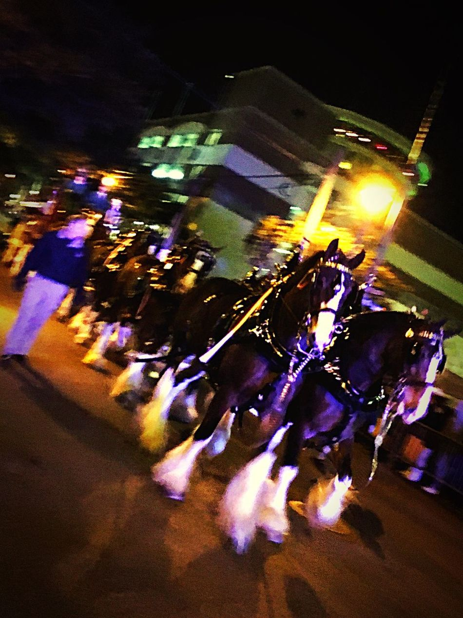 Showcase: February The Tourist Colors Of Carnival Mardi Gras 2016. Downtown Mobile 🎭 Beautiful Clydesdale Horses 👏🏻👏🏻🎭 Let The Parade Began 🎭