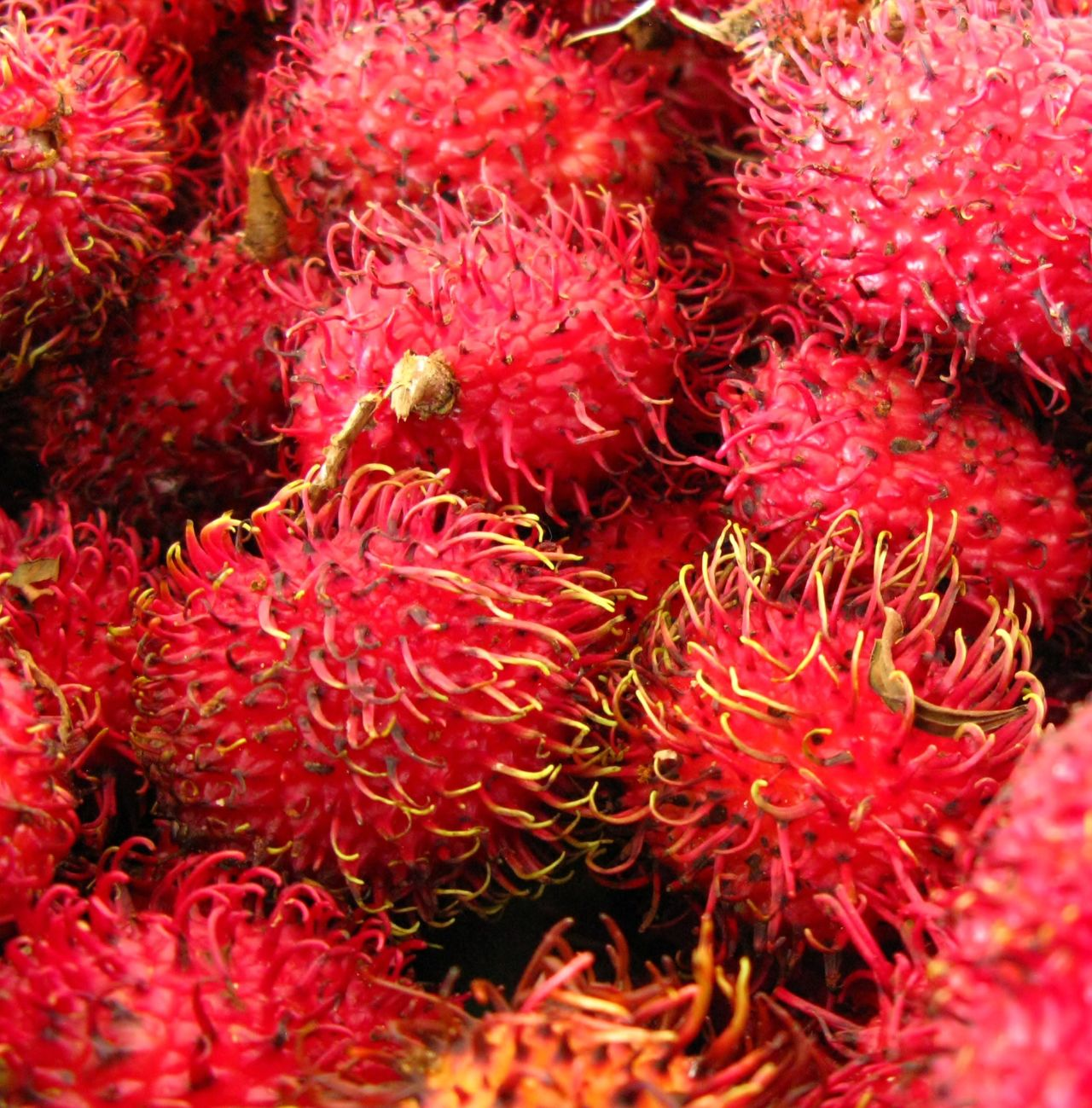 Backgrounds Close-up Day Food Food And Drink Freshness Fruit Full Frame Healthy Eating Lychee No People Outdoors Rambutan Red Exotic Fruits Fireball