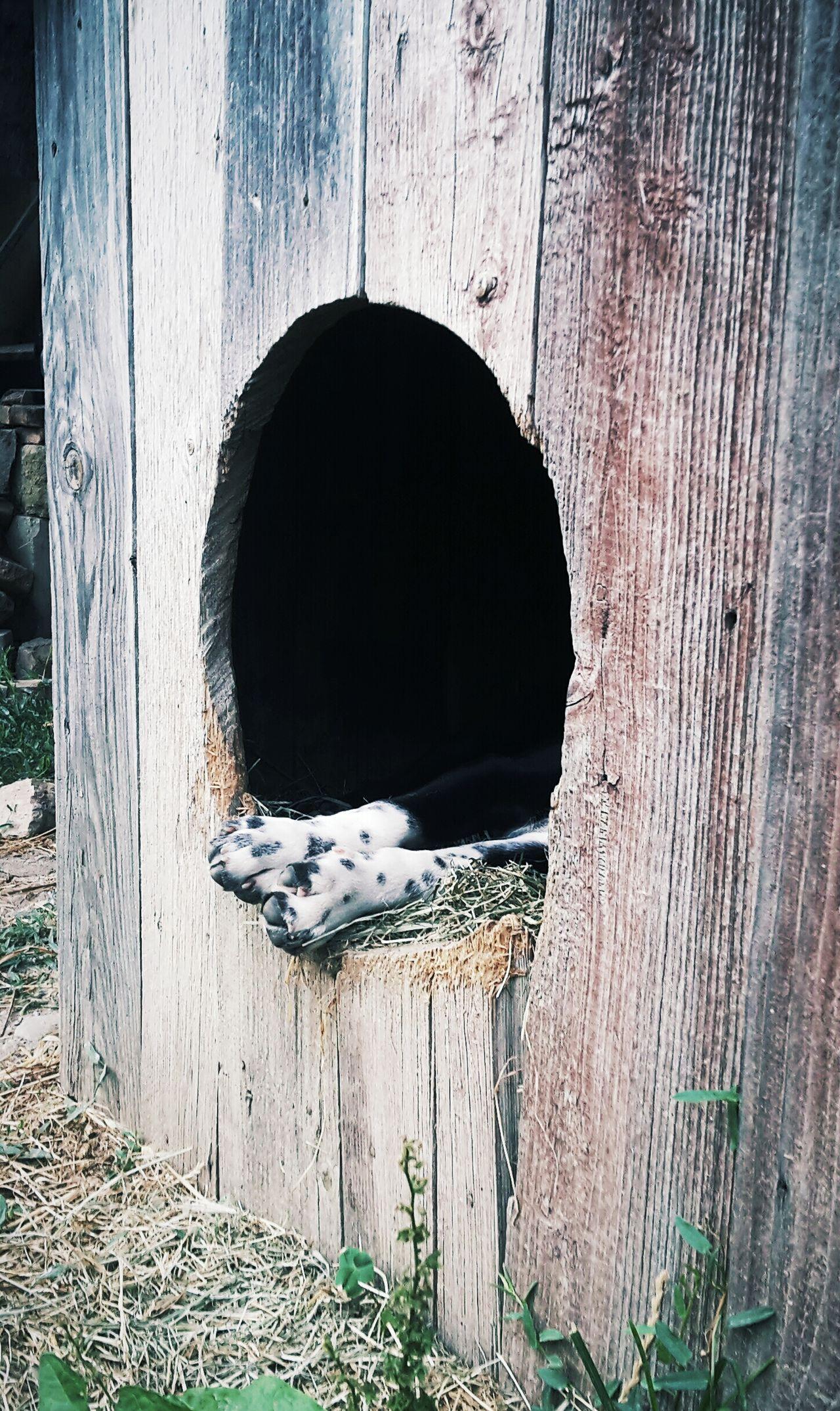 Outdoors Wooden Weathered Beagle Love Sleeping Beagleworld Beaglelife