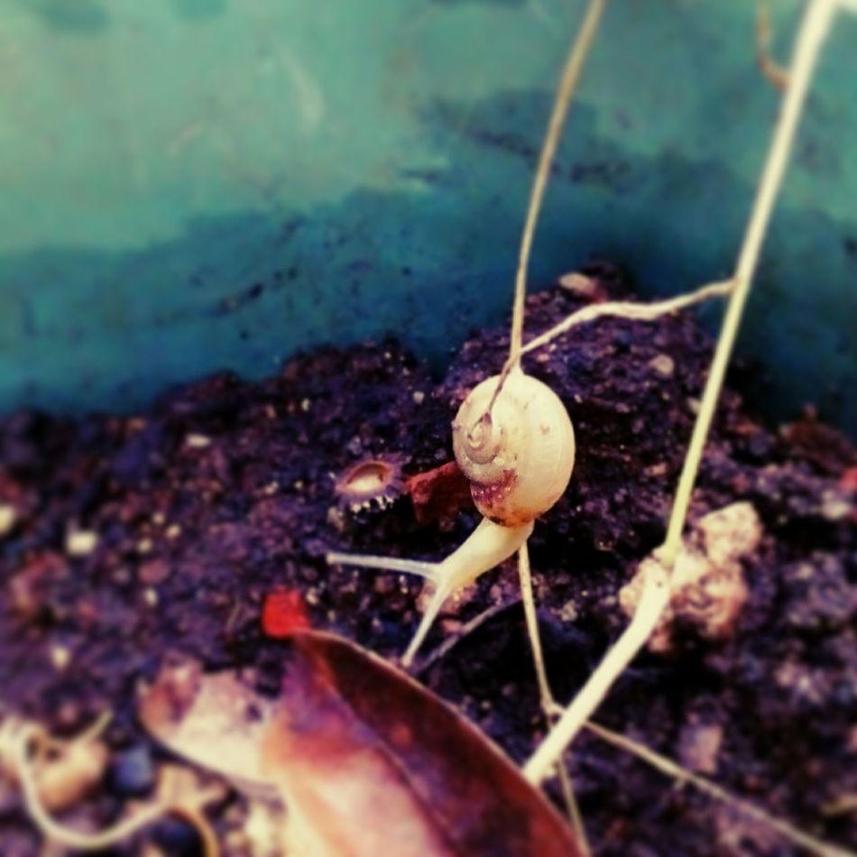 EyeEmNewHere @margaretevonjezierski Caracole Caracol Conch One Animal Animal Themes Nature