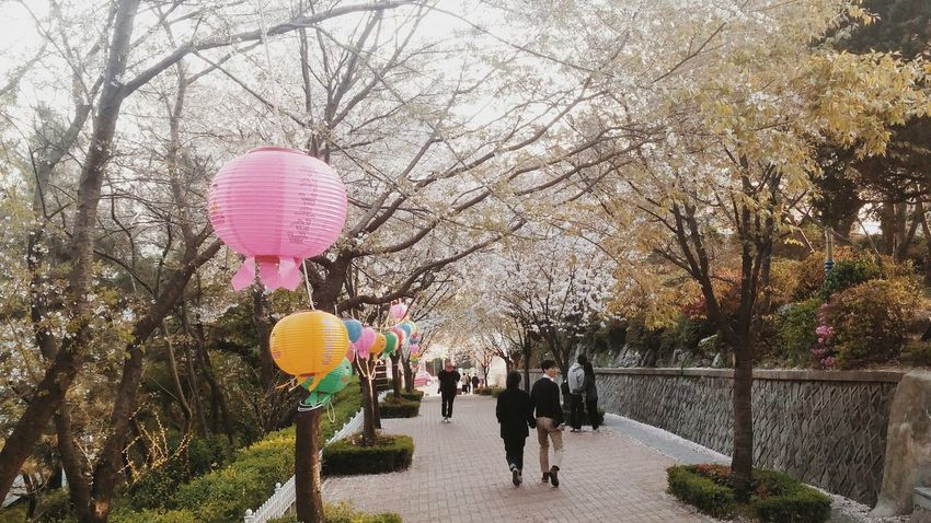 Incheon South Korea Cherry Blossoms Festive Season Festival Travel Filipinotraveller Travel Photography Travelandlife Eyemphotography Eyemphilippines