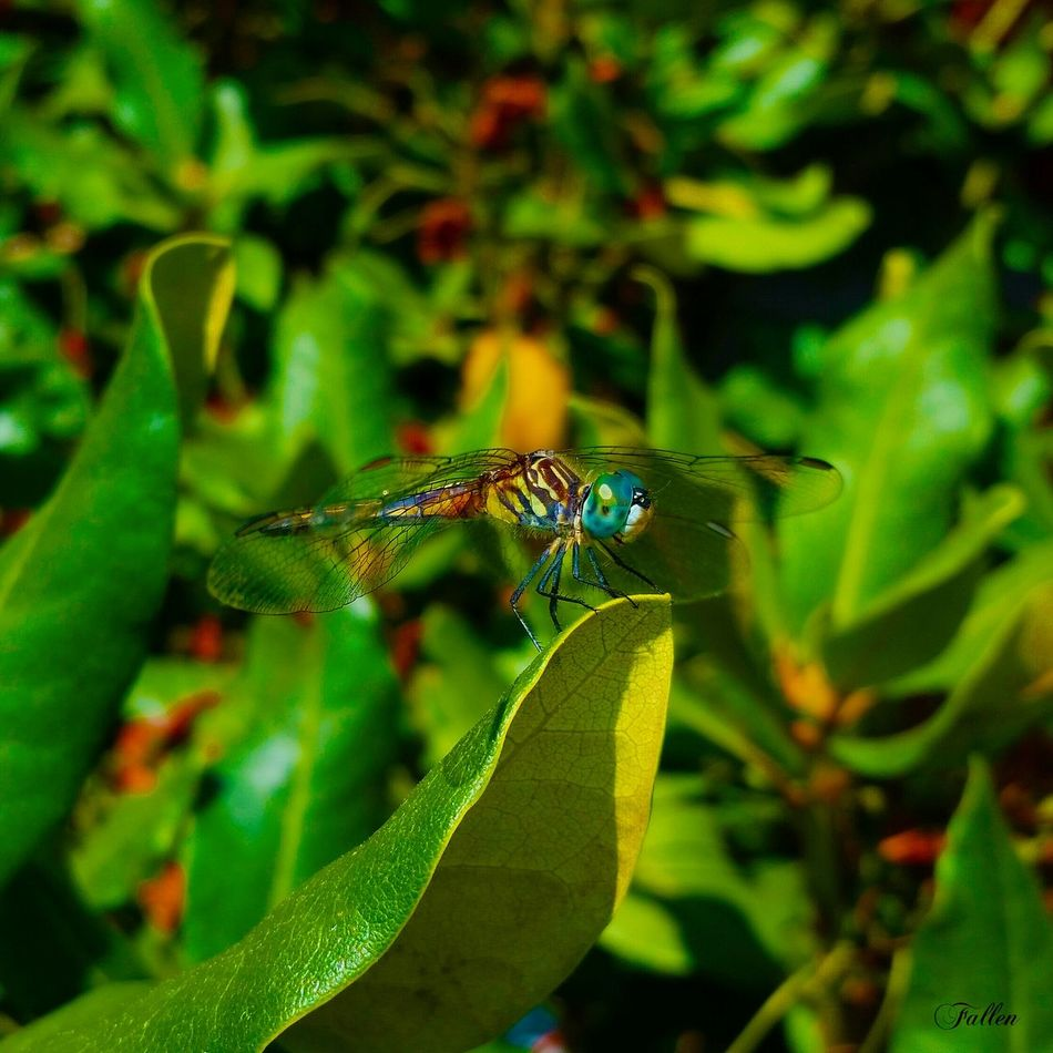Taken with:SGS5 size:8x8 Check This Out Nature Photography Hiking Adventure Dragonfly Insects  Outdoors Summer Nature Bluehills