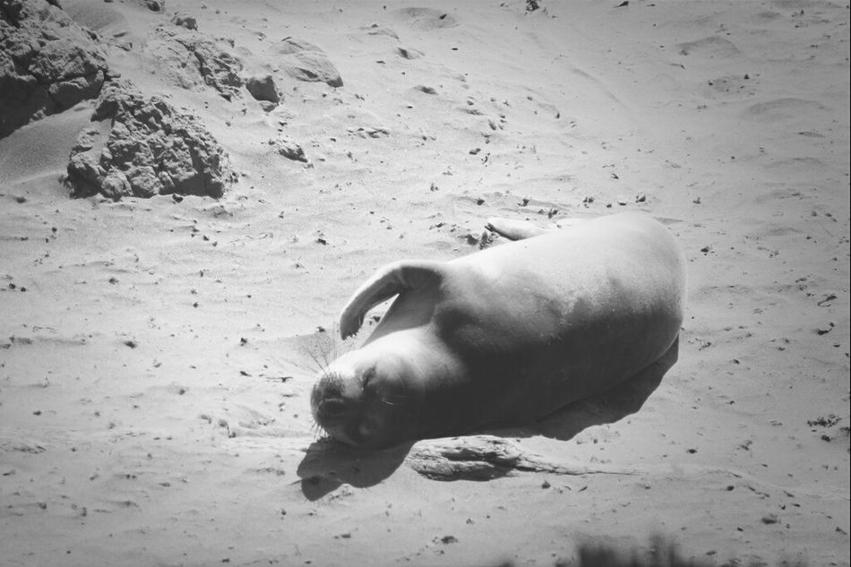 Seal   WestCoast Seal