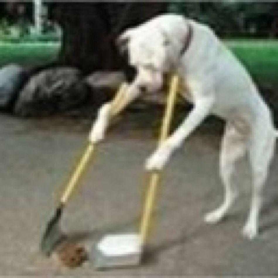 Dog Pooperscooper