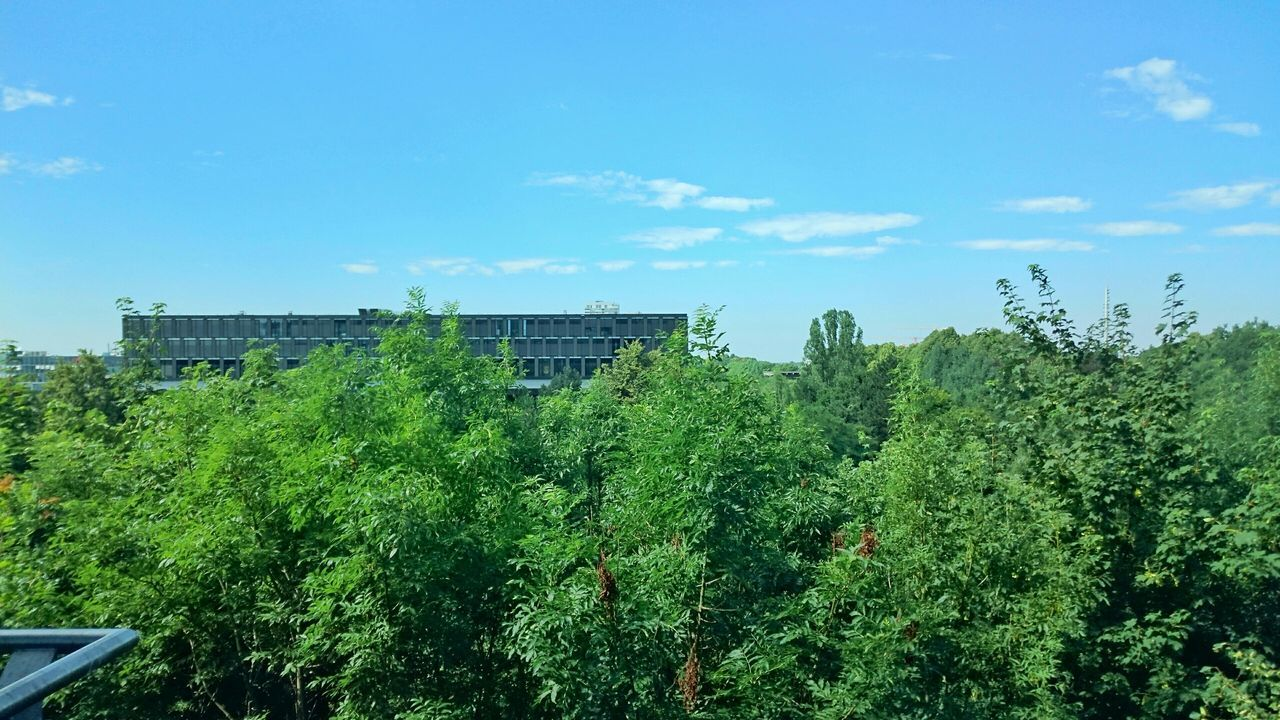 Office View Working Sony Xperia Z3+ Taking Photos Green Sky