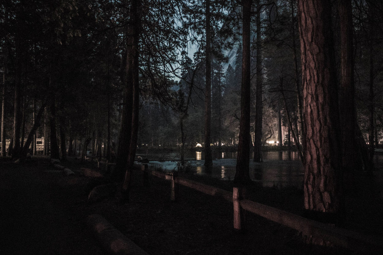 A campground with a bit of an eerie-scary-murder-in-the-woods-movie vibe. Tree Night Outdoors Nature Scary Movie Eerie Woods Forest Yosemite National Park California EyeEmNewHere