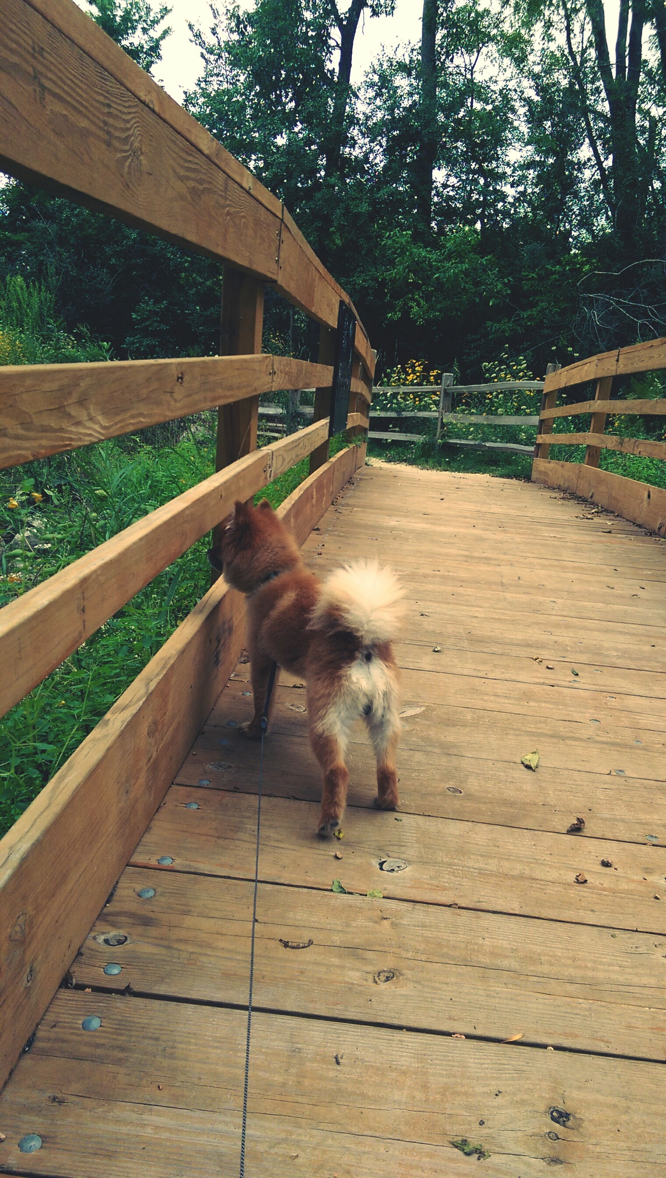 animal themes, domestic animals, mammal, one animal, pets, tree, dog, full length, built structure, sunlight, fence, building exterior, outdoors, day, railing, plant, architecture, no people, house, wood - material