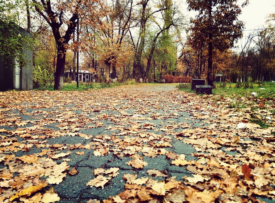 Beautiful stock photos of park, Armenia, Asphalt, Autumn, Bare Tree