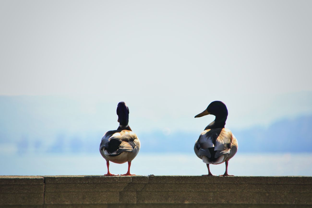 Whoa? Meersburg Not From My Balcony :) Eye4photography  EyeEm Best Shots EyeEm Nature Lover