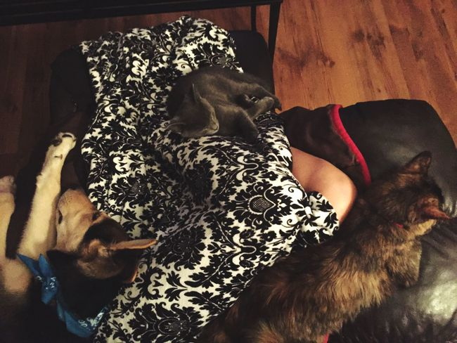 My little heaven Animals Pets Love Cuddle