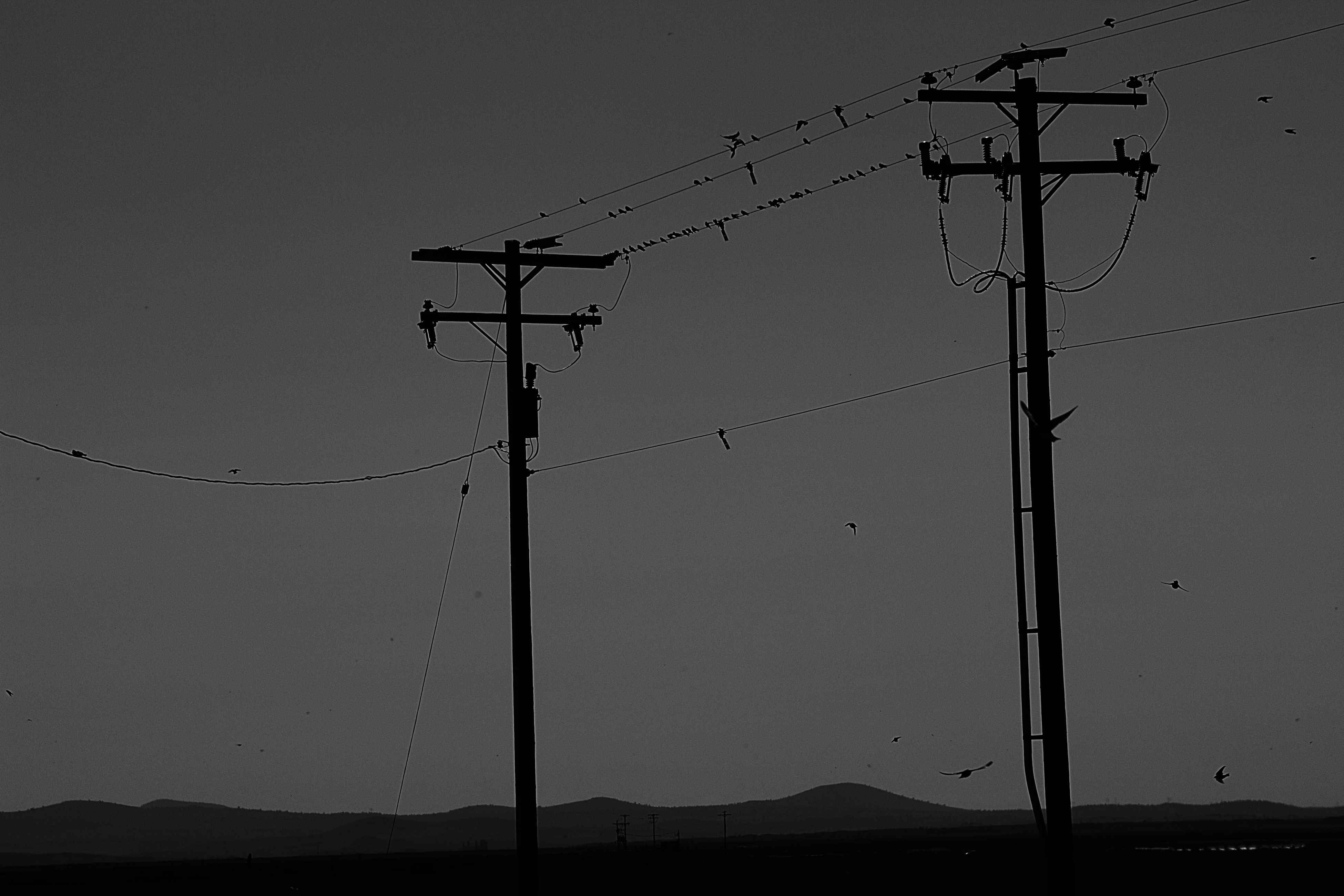 cable, connection, electricity, power line, technology, bird, power supply, low angle view, silhouette, electricity pylon, fuel and power generation, animals in the wild, outdoors, animal themes, telephone line, nature, no people, clear sky, day, perching, sky