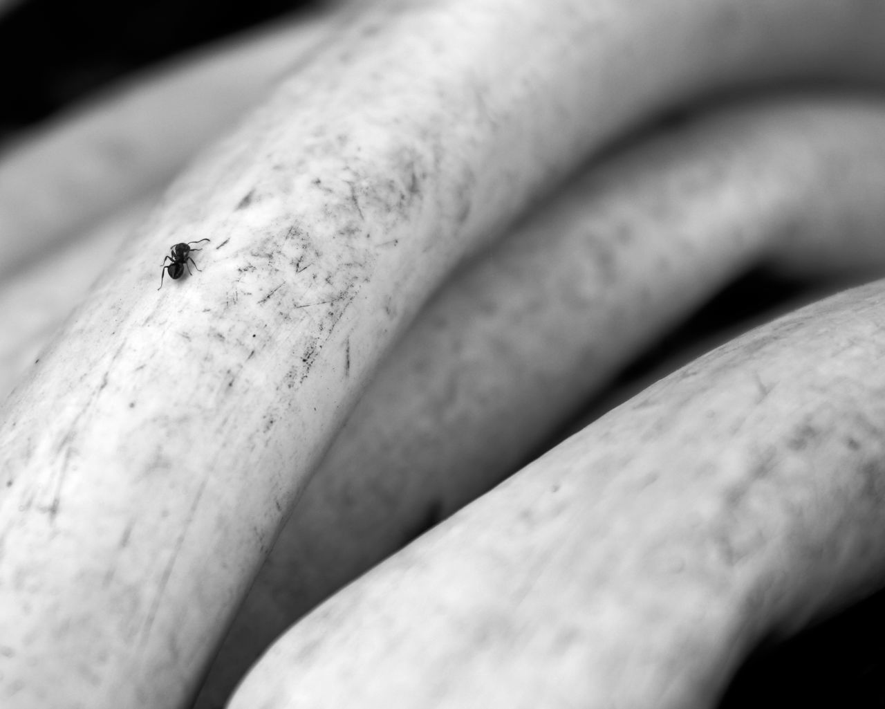 Close-Up Of Ant On Hose