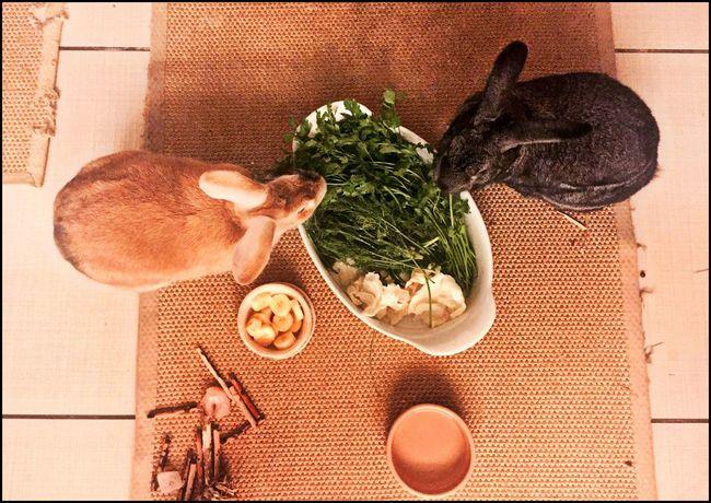 Bunny couple Animal Food Animal Photography Bunnies Bunny Love Bunny 🐰 Companions High Angle View Pet Rabbit Pets Rabbit Rabbits Rabbits Food