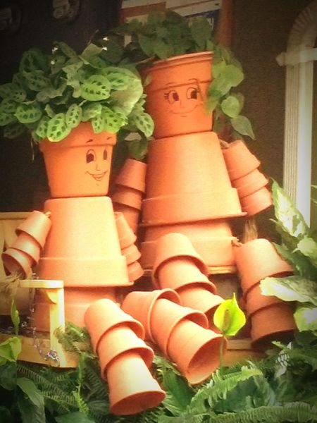 Summer Views Plants 🌱 Plants Strange Plants Plantstrong
