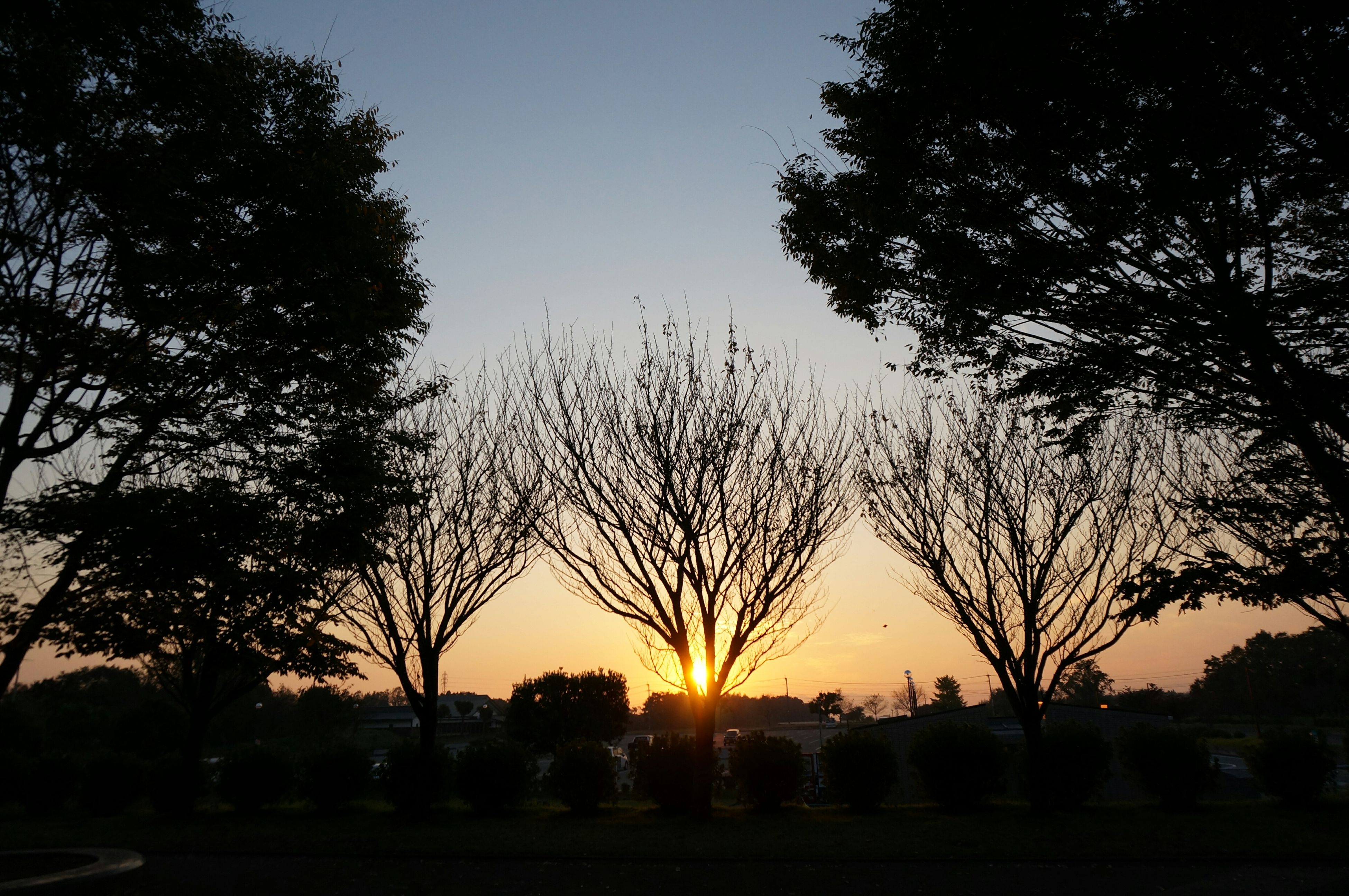 sunset, silhouette, tree, tranquil scene, tranquility, scenics, beauty in nature, sun, nature, sky, landscape, orange color, idyllic, clear sky, field, sunlight, bare tree, growth, branch, no people