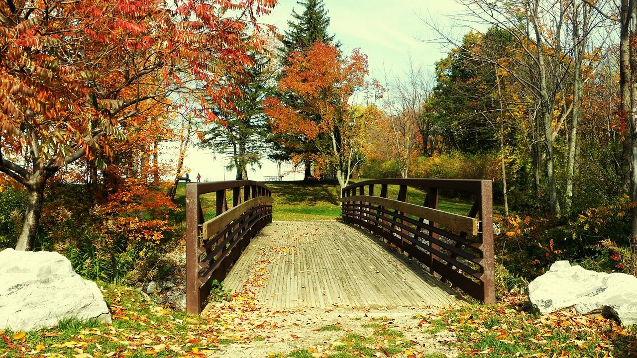 Beauty In Nature Wooden Bridge Over Water lake Erie State Park