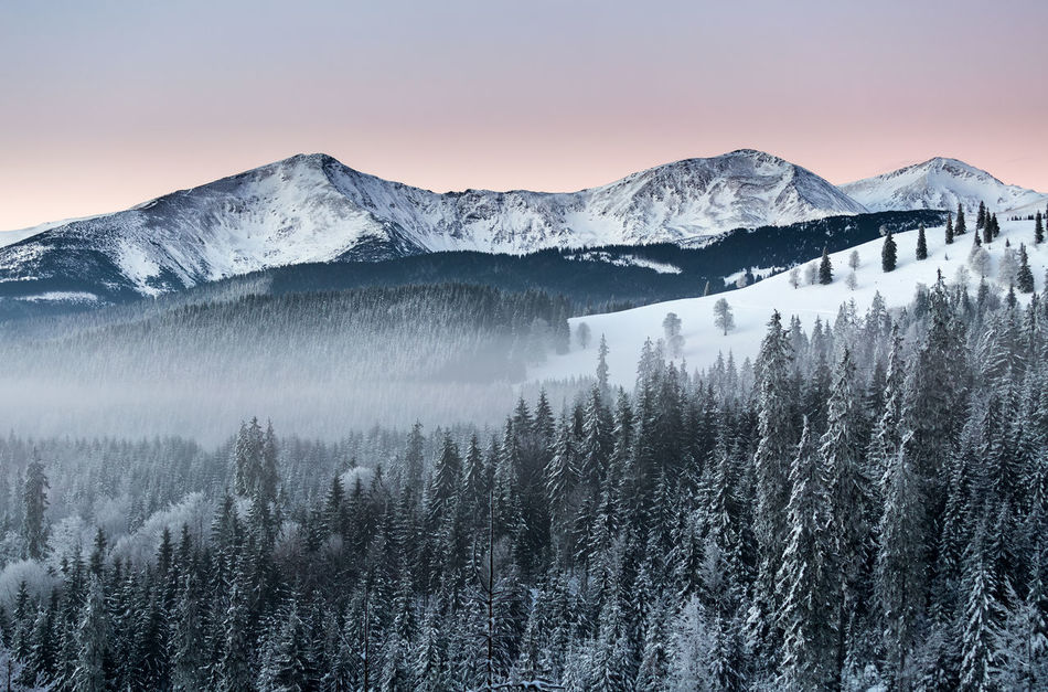 Before sunrise in Rodnei Mountains Beauty In Nature Cold Temperature Day Forest Landscape Mountain Mountain Peak Mountain Range Nature No People Outdoors Pinaceae Pine Woodland Scenics Sky Snow Snowcapped Mountain Sunrise Sunrise_Collection Tree Winter