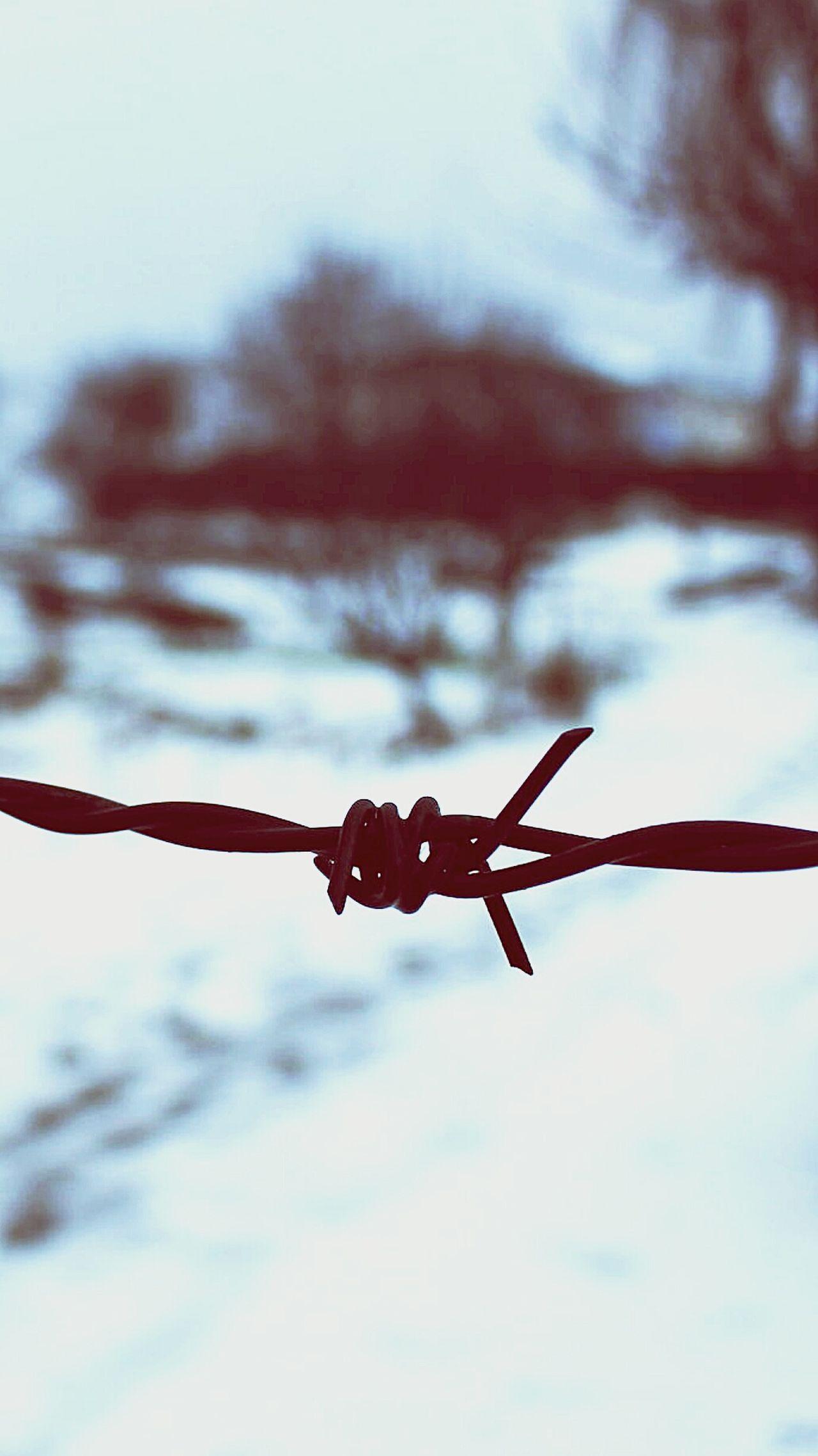 Barbed Wire Snow ❄ Snowbackground Blurred Background Blurred Photos. Blurredbackground Blurred Vision