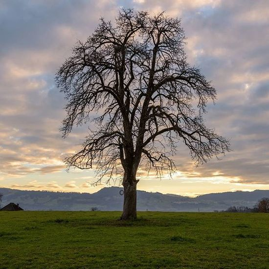 Landscape Landschaft Natur Nature Tree Baum Nikon Sbisa2life_photography Photographer Swiss_photographer Hombrechtikon Zürich Switzerland Schweiz Sunset Clouds Wolken Bisang