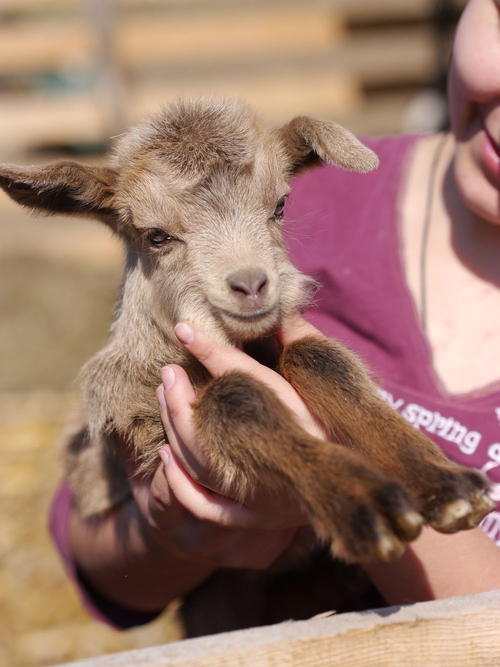 Domestic Animals Goatling Human Finger Human Hand Lifestyles Livestock Mammal One Animal One Person Real People Young Animal