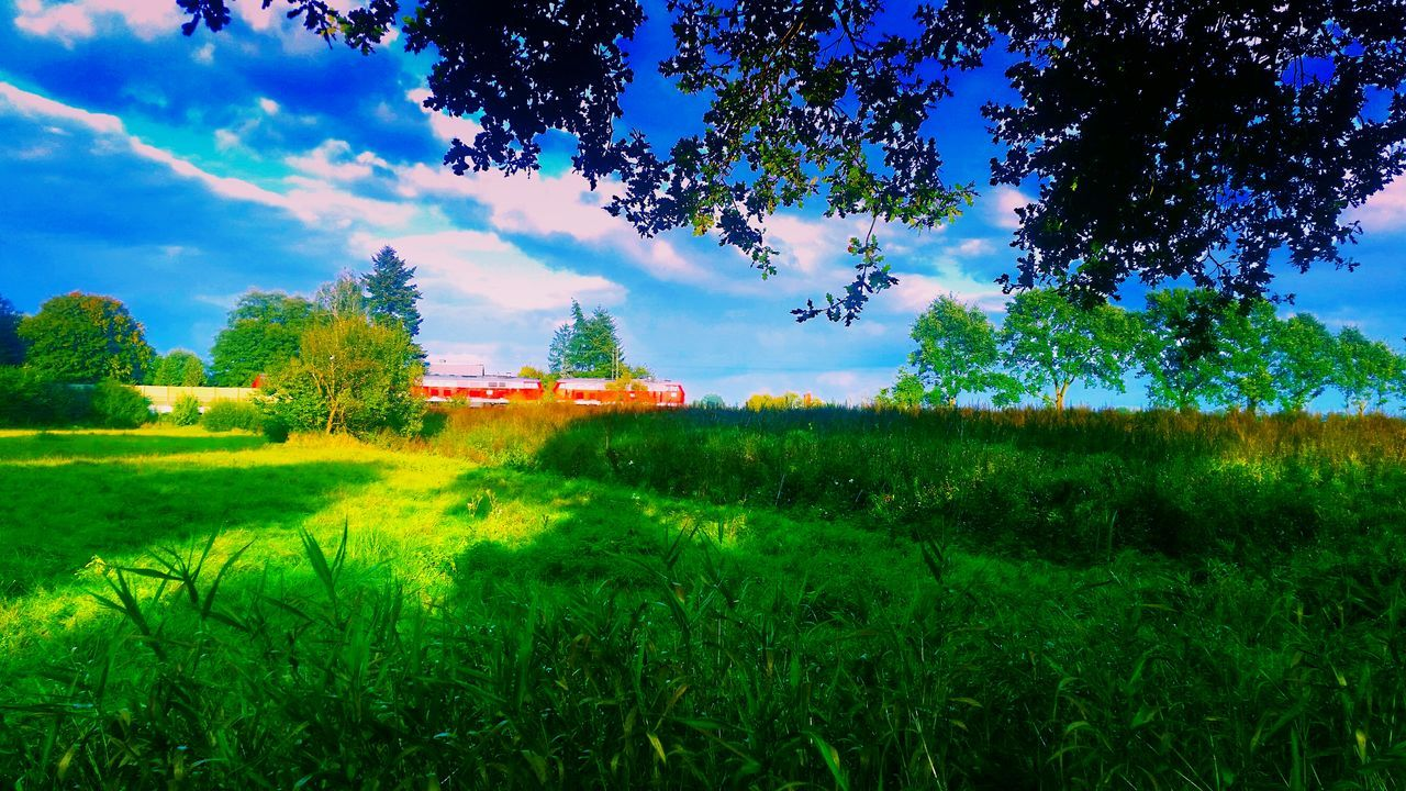 field, nature, beauty in nature, green color, growth, sky, day, grass, outdoors, no people, tree, scenics, landscape, architecture