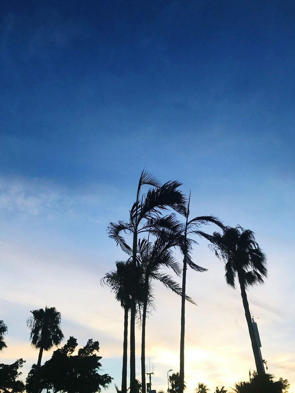 tree, palm tree, low angle view, silhouette, sky, beauty in nature, tree trunk, nature, scenics, sunset, outdoors, no people, growth, tranquil scene, tranquility, blue, day