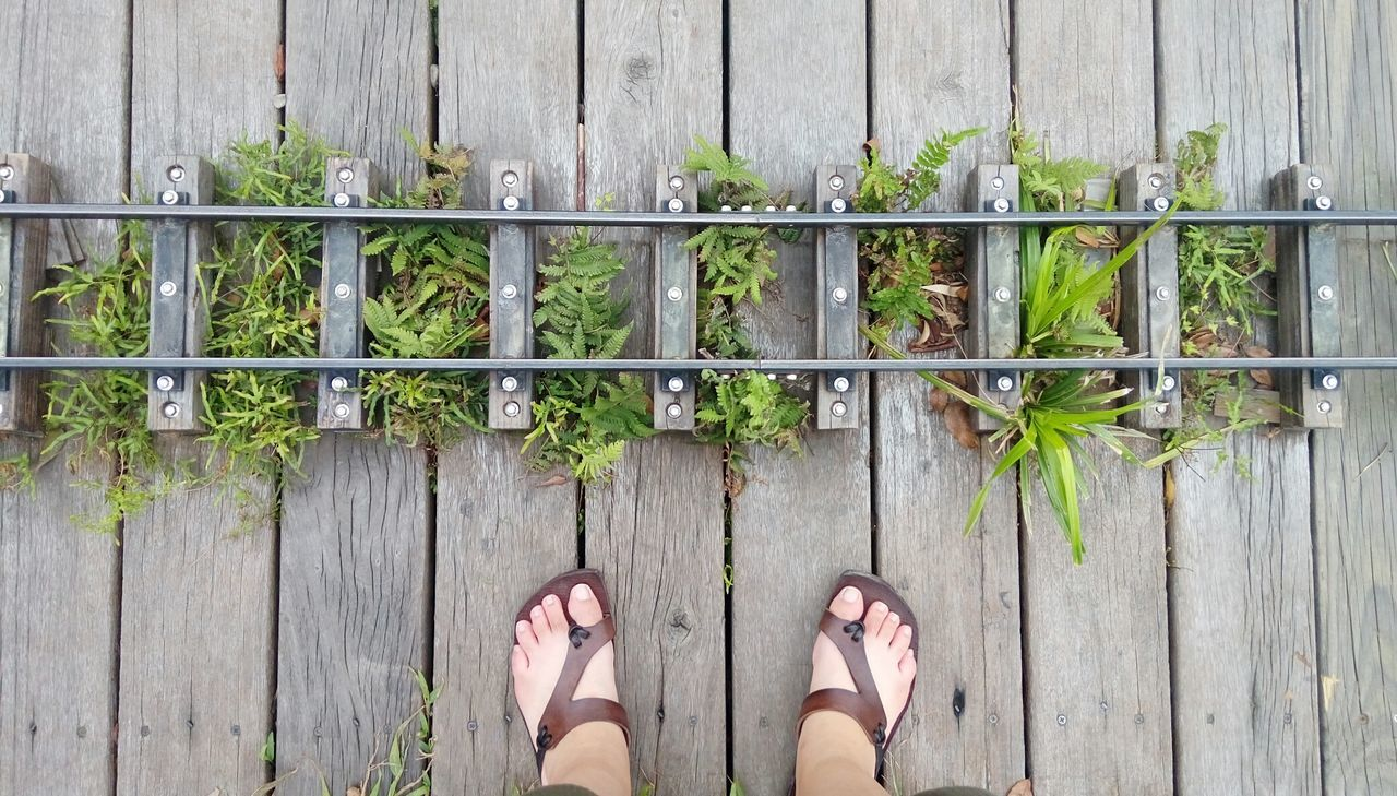 Human Body Part Human Foot Slippers Children Train Train Rail Plants Plant Green Plant