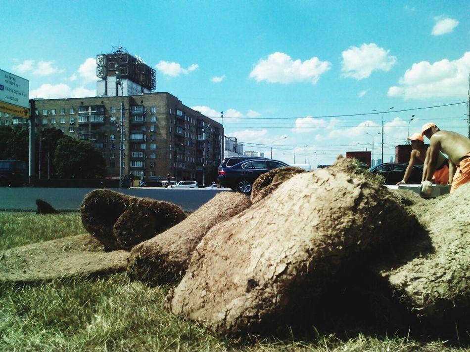 Мёртвую траву кладут : Москва Гагаринский ПлощадьГагарина ЮЗАО