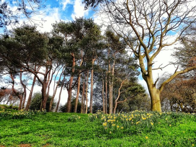 Taken in Pannett park Whitby on a lovely day Whitby Whitby View Majestic Nature HDR Creative Light And Shadow Color Photography EyeEm Nature Lover In The Sunshine Eye For Photography See The World Through My Eyes Fujifilm No People Scenery Photography Nature Photography Trees And Sky EyeEm Tree Collection Beautiful Place Beauty In Nature The Great Outdoors With Adobe