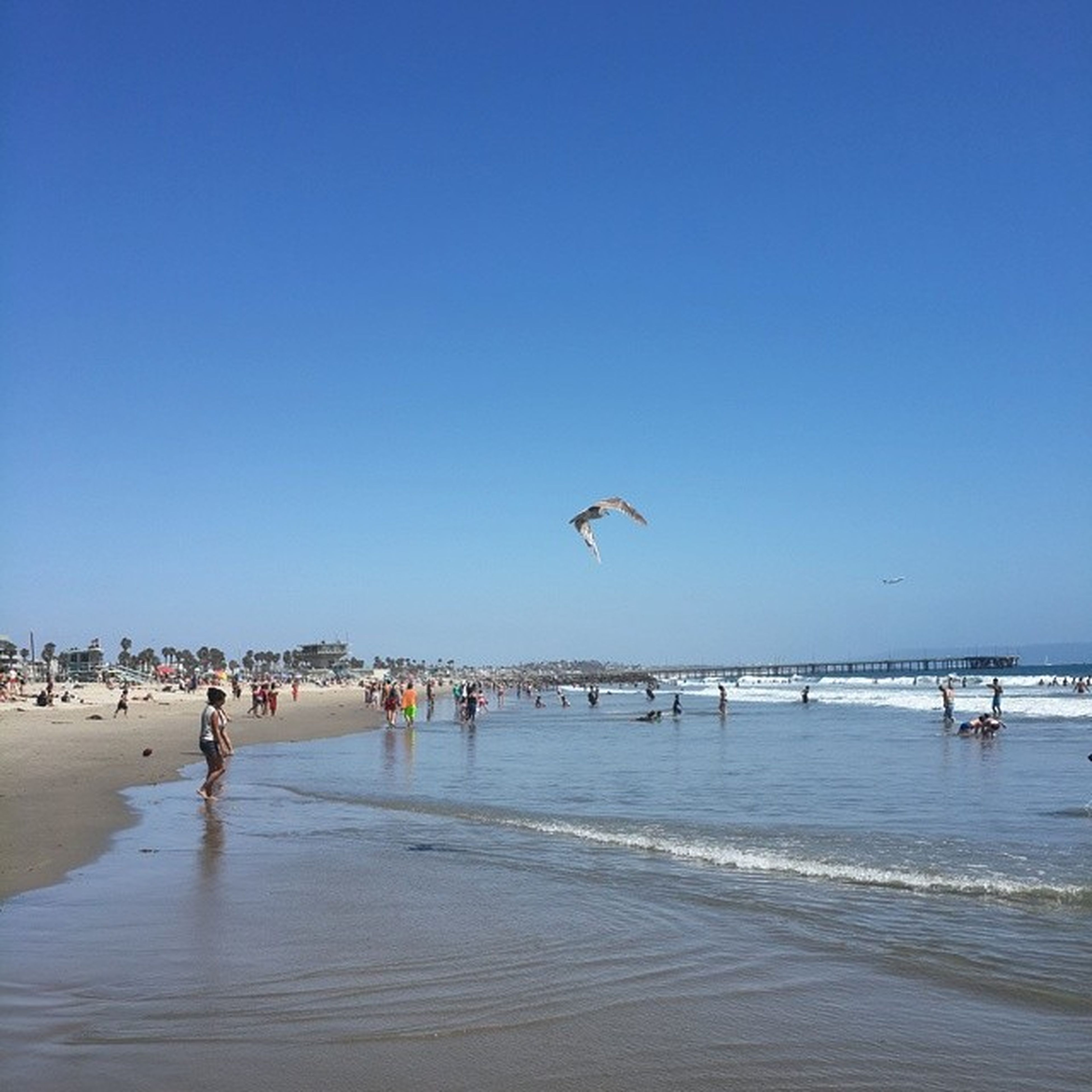 sea, beach, clear sky, water, flying, copy space, blue, bird, sand, shore, horizon over water, animal themes, wildlife, mid-air, nature, tranquil scene, vacations, scenics, tranquility, beauty in nature