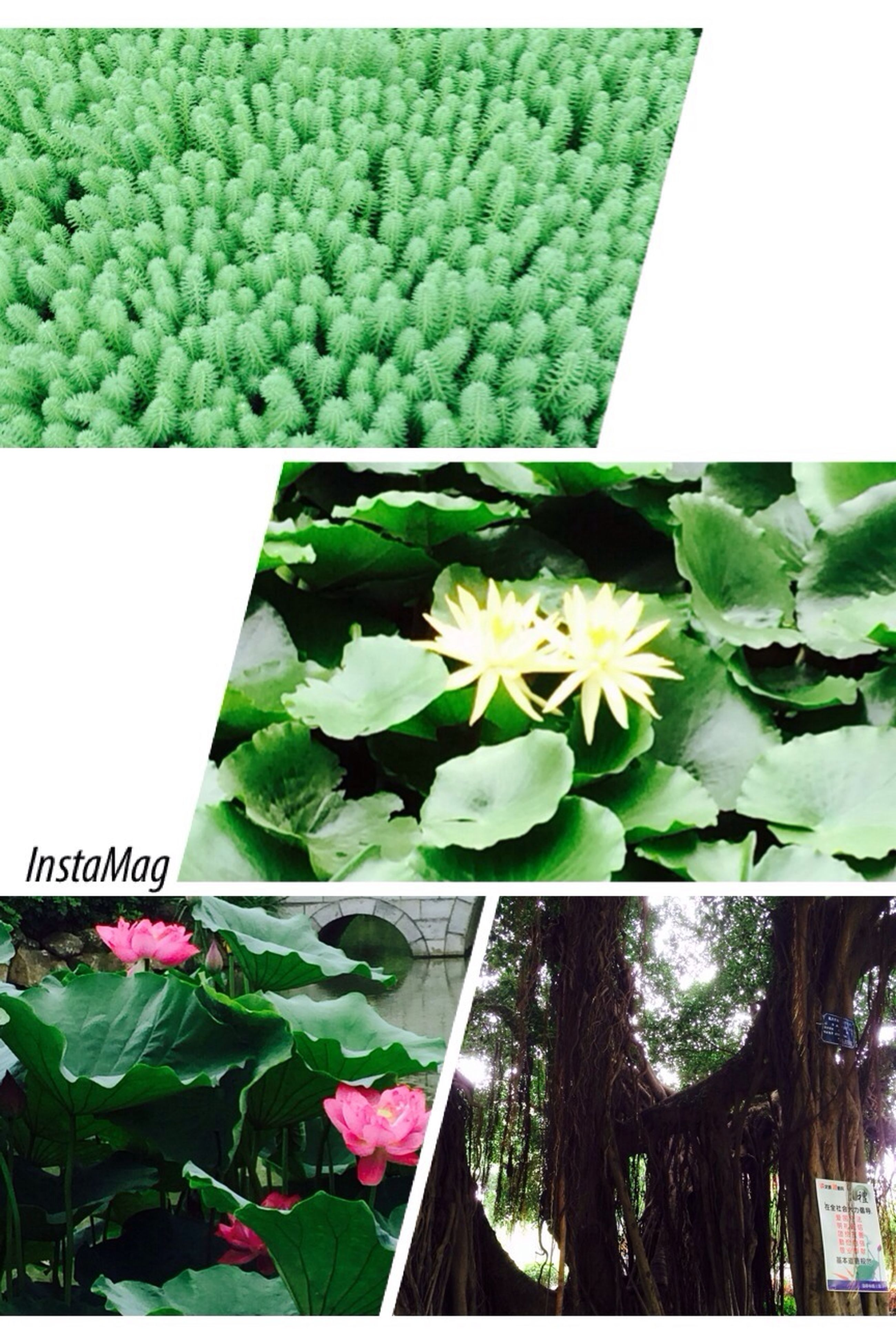 flower, freshness, growth, fragility, leaf, green color, flower head, beauty in nature, close-up, plant, petal, nature, white color, high angle view, green, no people, day, potted plant, blooming, text