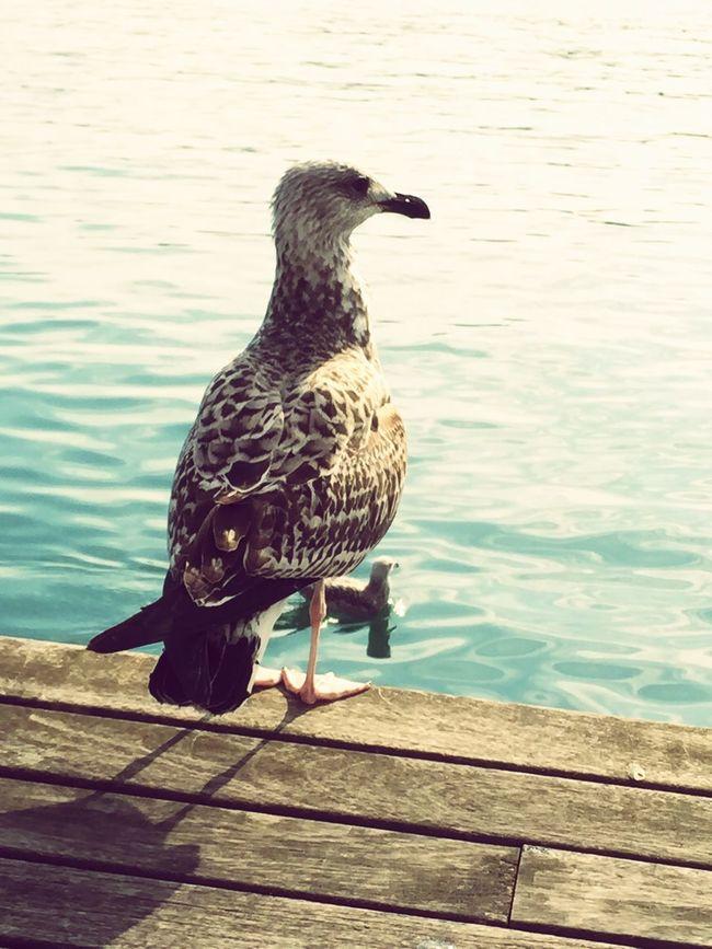 PortdeBarcelona Gull Port Mouette Barcelona