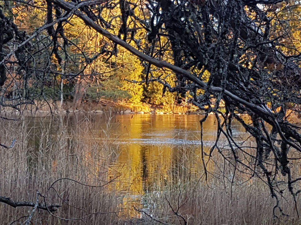 tree, nature, reflection, beauty in nature, lake, branch, no people, outdoors, water, tranquil scene, bare tree, tranquility, scenics, day, forest, autumn, sky