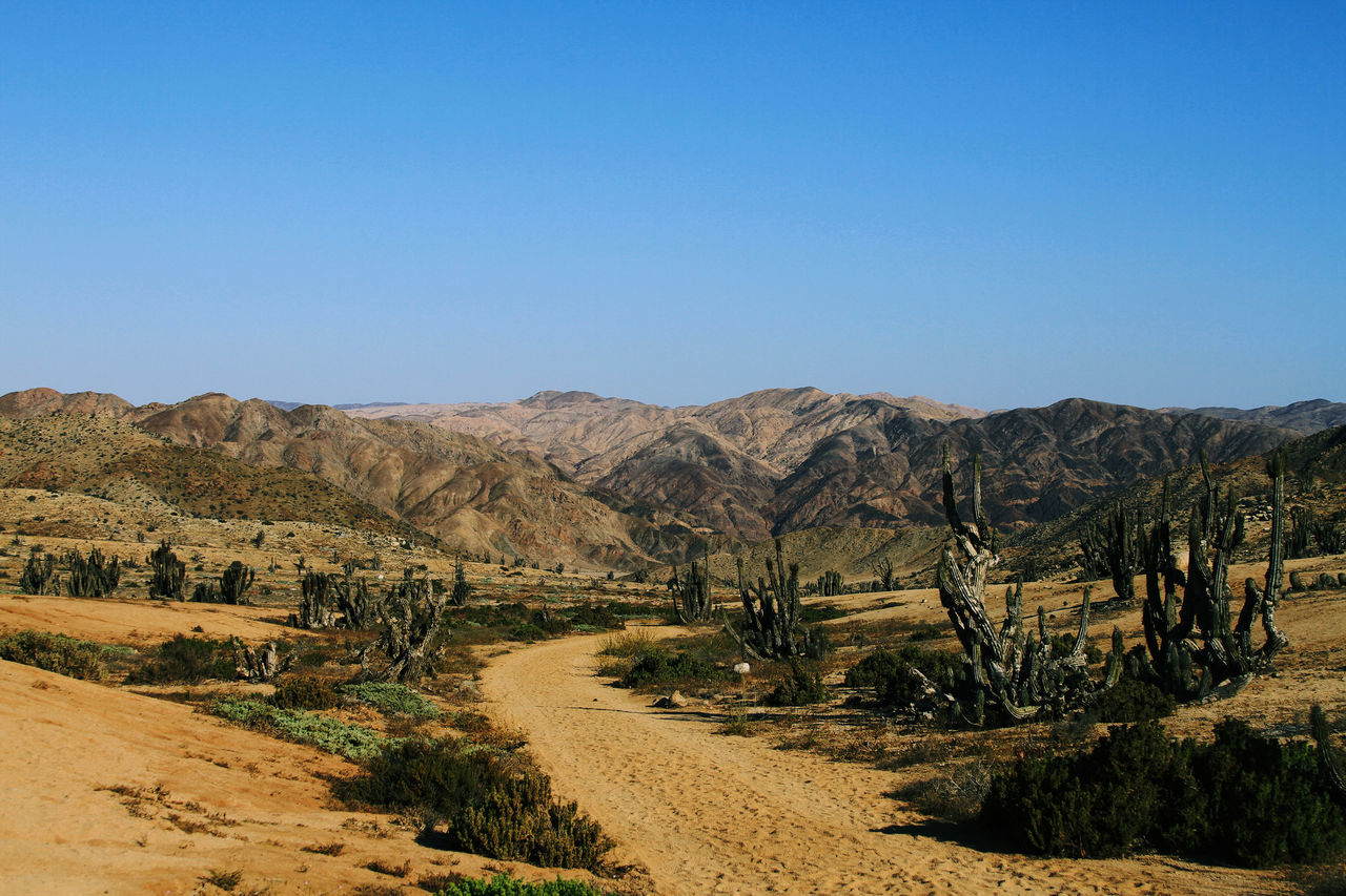 tranquil scene, landscape, clear sky, tranquility, scenics, nature, mountain, non-urban scene, beauty in nature, day, no people, outdoors, arid climate, blue, tree, desert, sky
