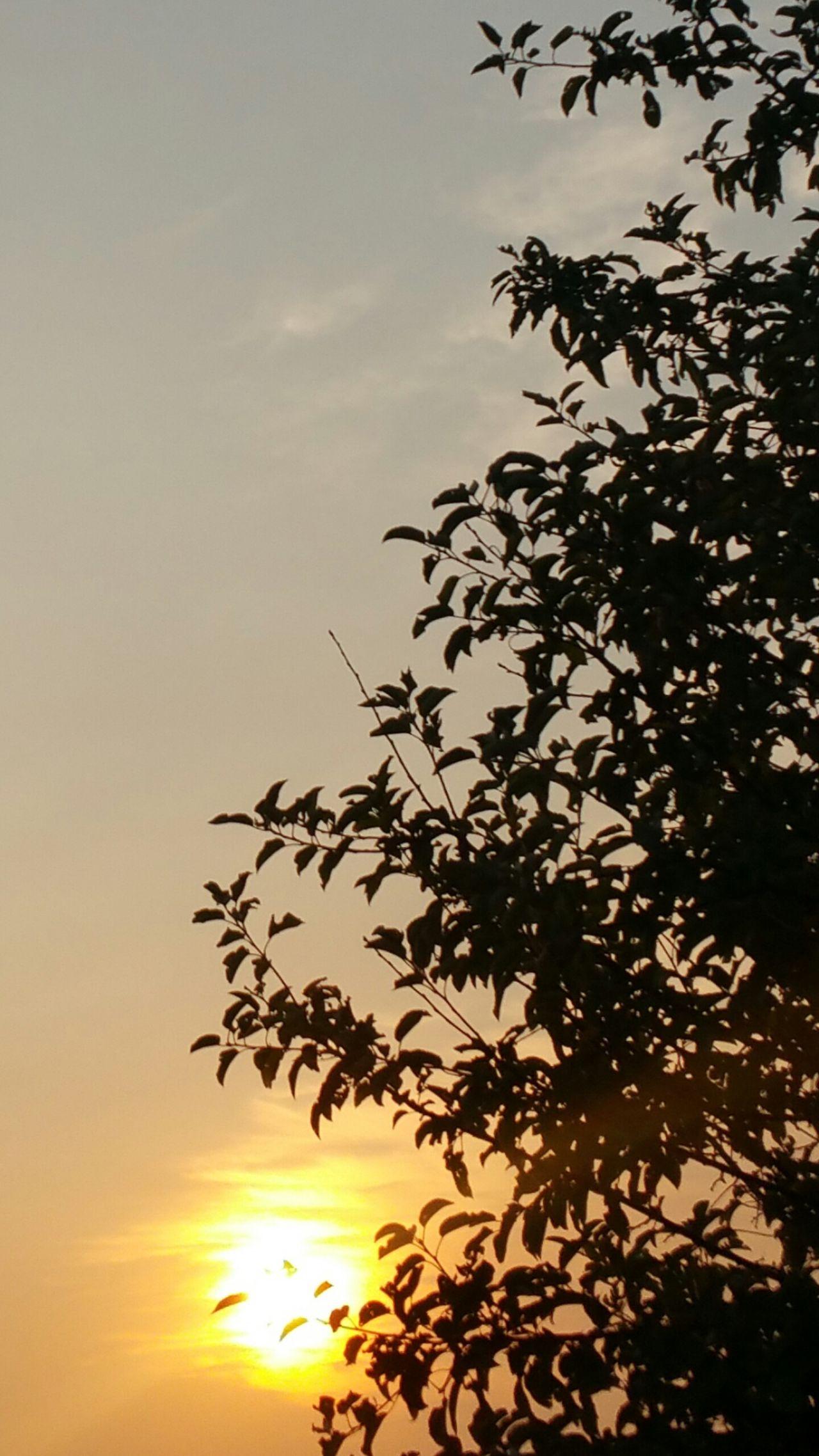 Sunrising Slight Bit Of Haze Beautiful And Bright Sunrise Yellow Orange sunrising behind and through the tree