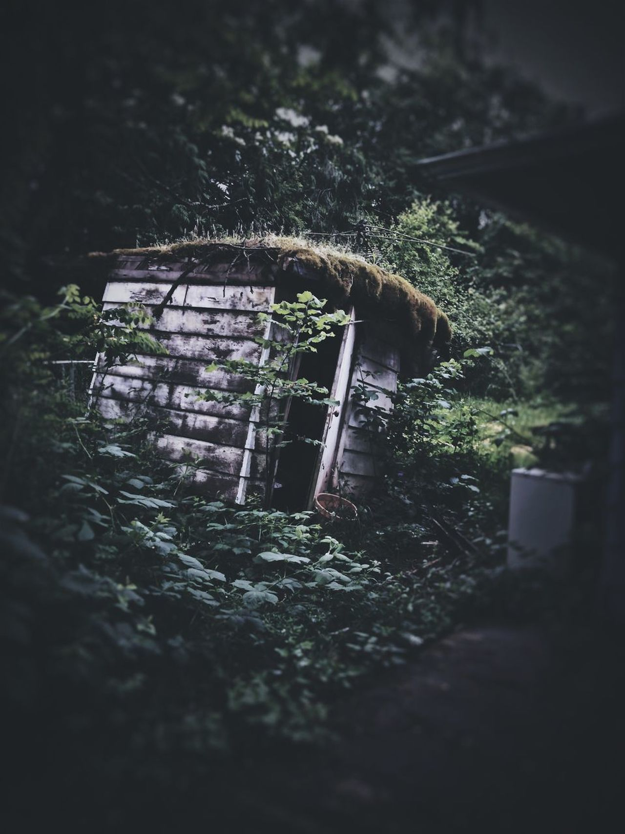 Creepy Places Outdoors Nature Built Structure Over Grown Grass Yard Sinking Architecture Tree Landscape Creepy Atmoshpere Creepy Creepy Building