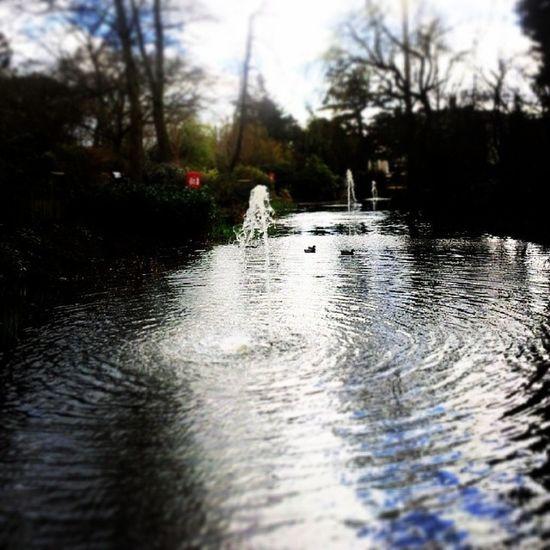 Kingsheathpark Birmingham Strolling Nature Parks Lakes  Springwalk Spring2014 Water Waterlove Waterfeature Fountain