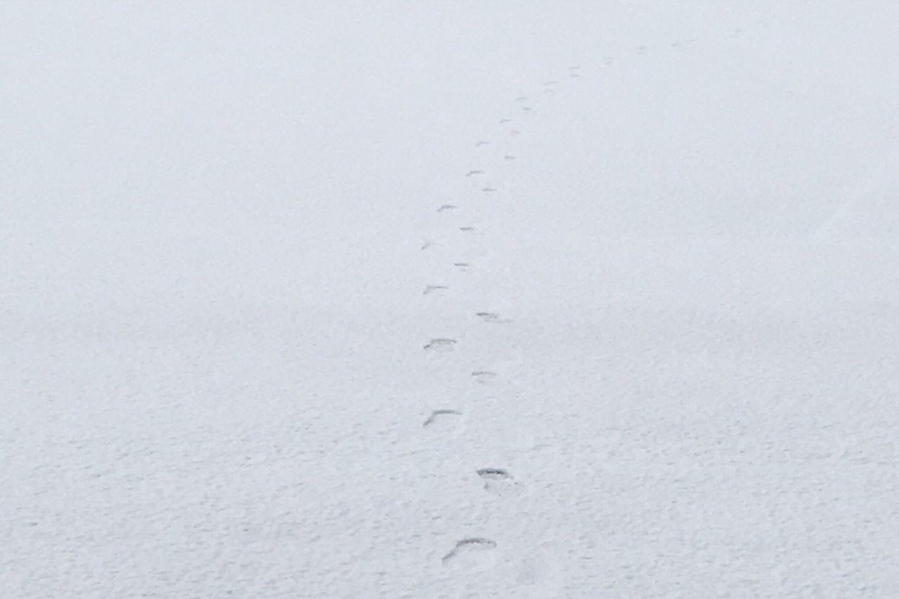 通勤路。 No People Snow Footprints Footprints In The Snow Nature Nofilter NoEditNoFilter Noedit Hello World Morning Miyagi Sendai Silence Silence Of Nature