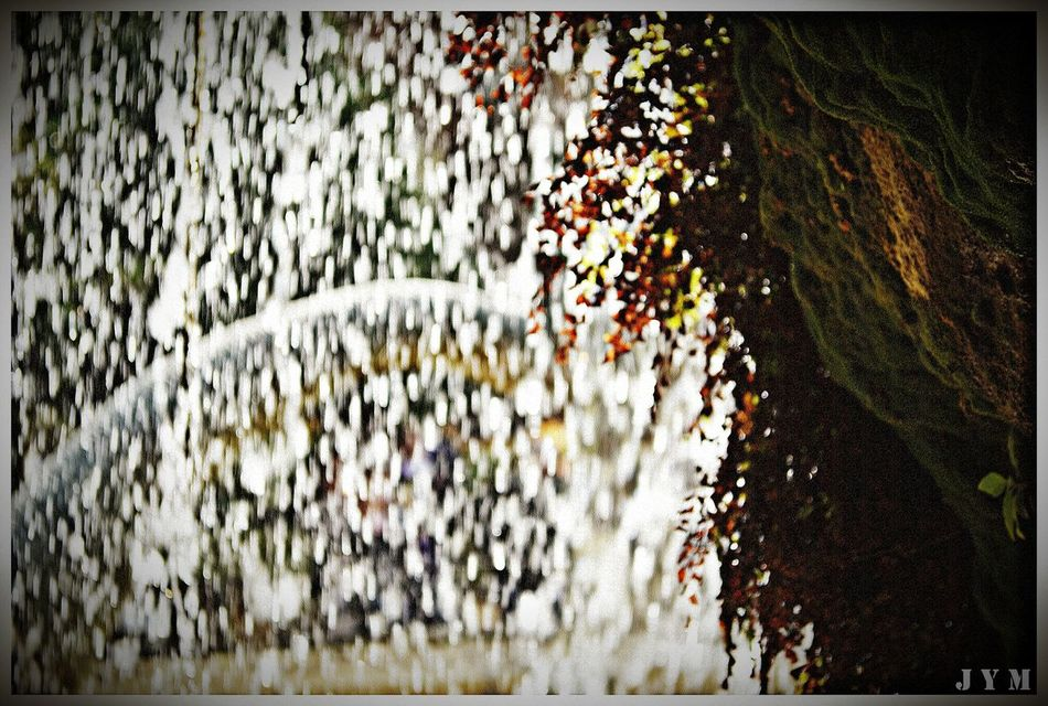 Cueva Day No People Outdoors Growth Plant Nature Close-up Textured  Backgrounds Ivy Beauty In Nature Tree