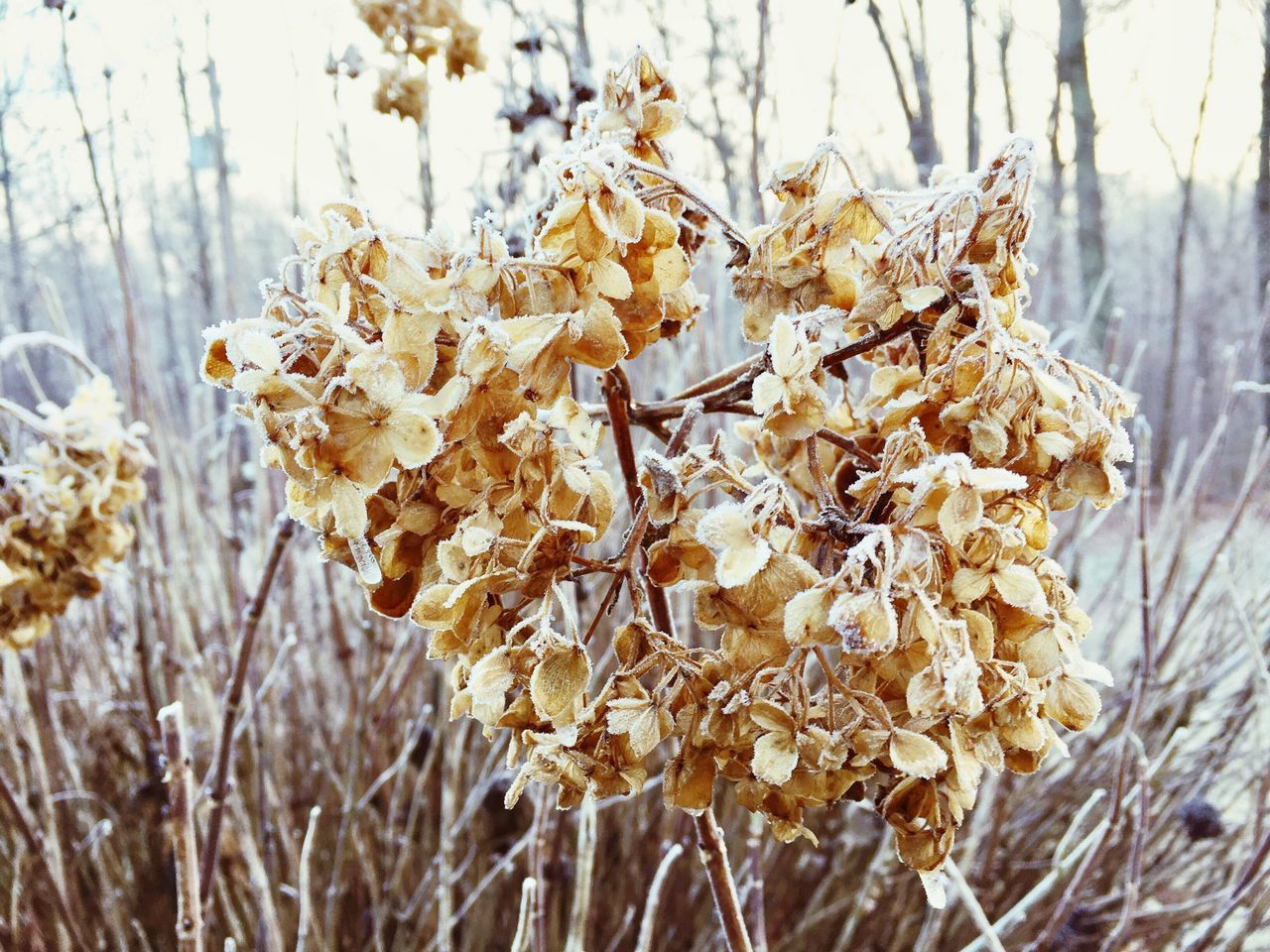 Freezing Fog Nature Close-up Growth Flower Plant Day No People Outdoors Beauty In Nature Winter Fog Ice Cold Frost Tranquil Scene Frosty Mornings