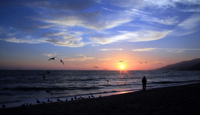 Sunset at Santa Monica, California. The ocean and the beach always attracts me - Santa Monica at its best Beach Beauty In Nature Bird Blue Sky Golden Hour Horizon Over Water Nature Outdoors Sea Silhouette Sky Sun Sunset Watching The Sunset