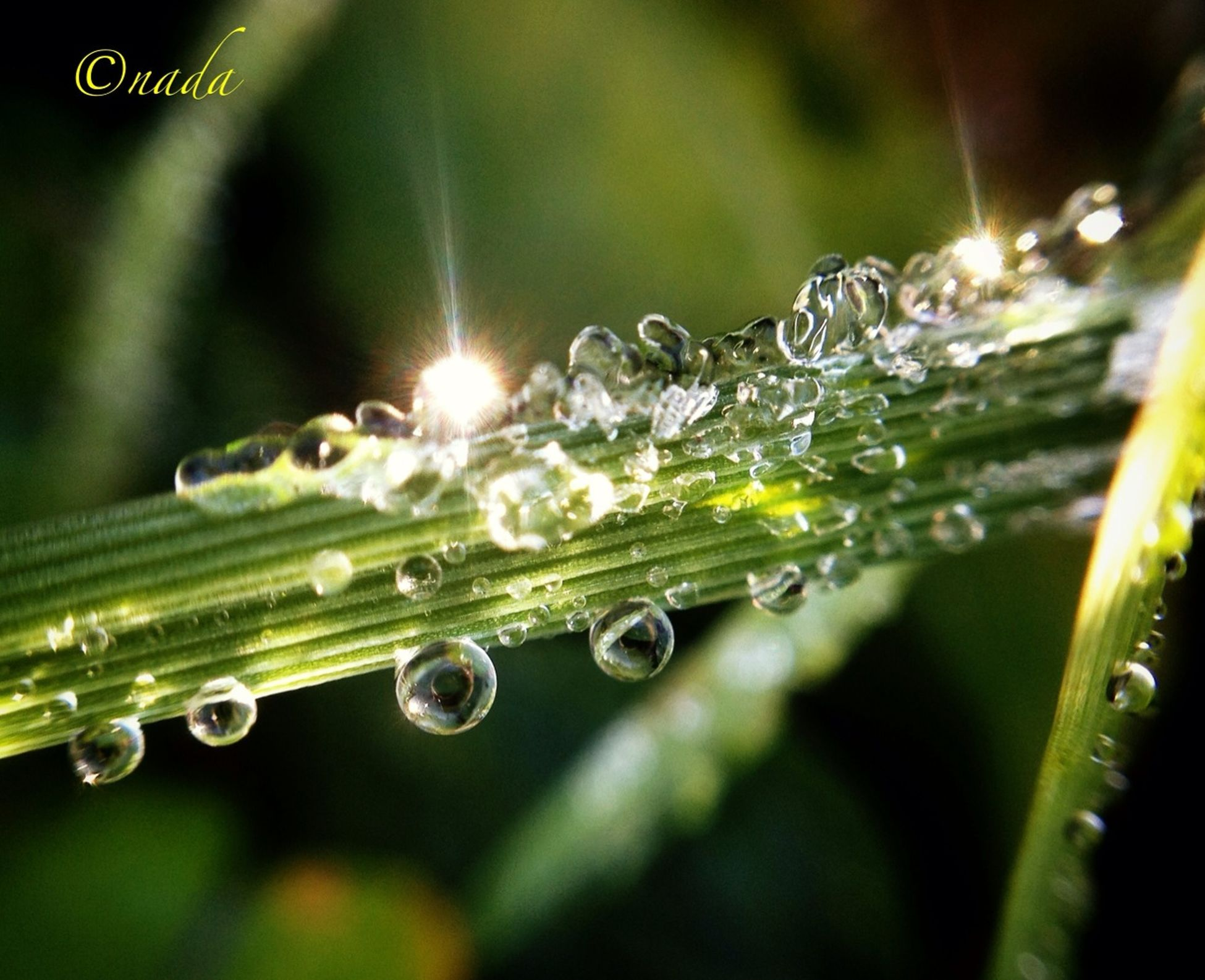 drop, water, wet, dew, close-up, focus on foreground, fragility, freshness, raindrop, droplet, rain, beauty in nature, nature, water drop, purity, growth, green color, selective focus, plant, blade of grass