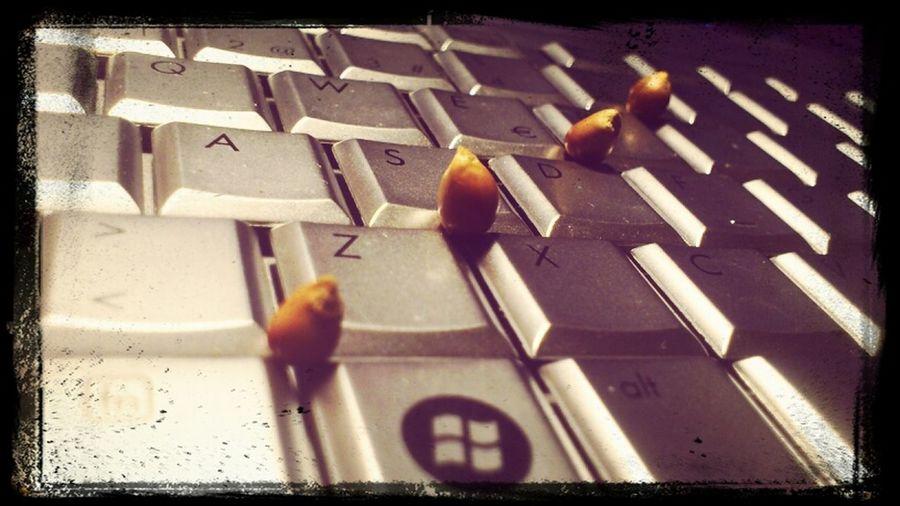 Food Popcorn Enjoying Life Film PC
