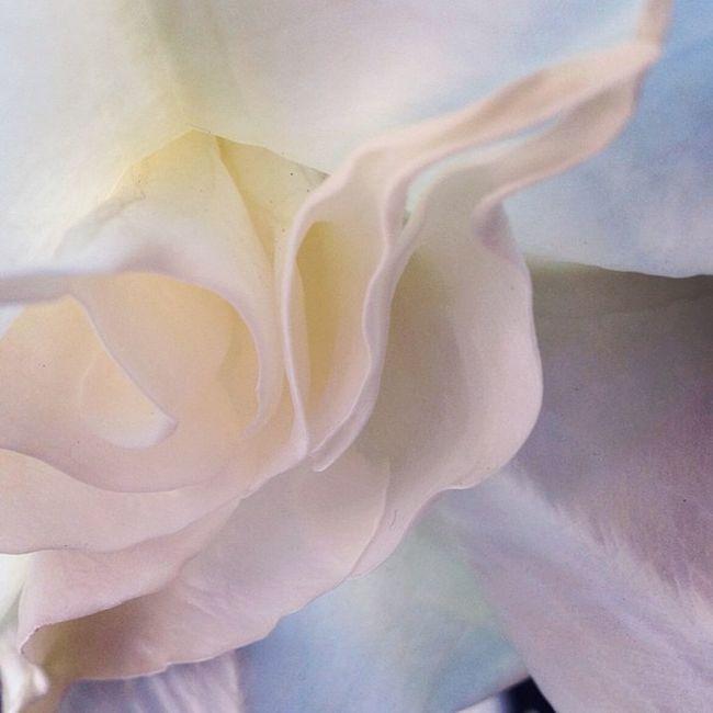 #irox_macro #master_pics #ti_break #csummerpic #whitesunday #photoblipoint #white #flower #soft Flower White Soft Master_pics Whitesunday Photoblipoint Jj_forum_0389 Soft_tones_monochrome Irox_macro Csummerpic Ti_break
