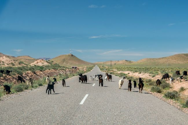 Africa Country Road Day Goats Goats On The Road Hill Landscape Morocco Nature Outdoors Road Running On The Road Sky Tourism