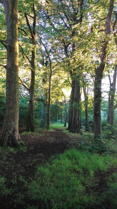 Forest Green Blackburn