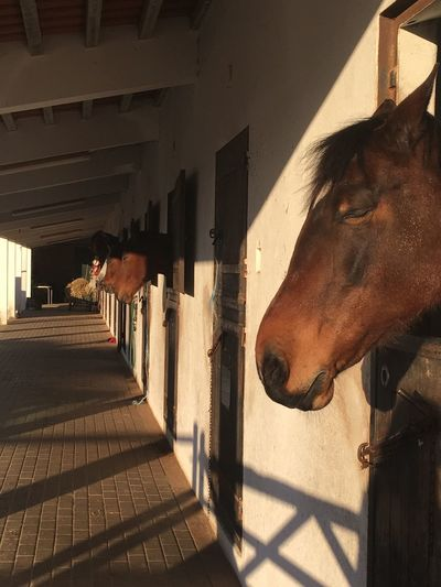 Domestic Animals Animal Themes Mammal Horse One Animal Sunlight Built Structure Herbivorous Stable Shadow Working Animal Building Exterior No People Day Architecture Outdoors