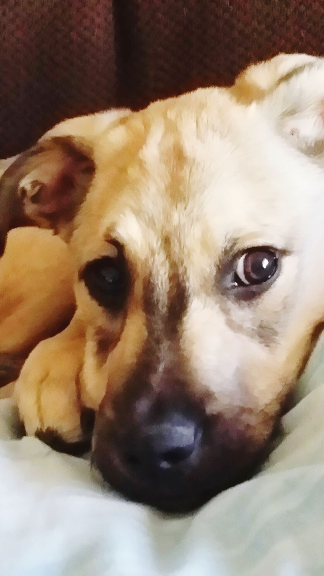Thats my Ruckas .... Dog Looking At Camera One Animal Close-up Pets Portrait Domestic Animals
